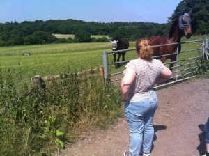 Shar and horses in a field at the back of Mote Farm. Click to enlarge