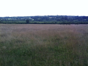 A view across Merry Hill. The colour contrasts between fields in the foreground and in the distance is very noticeable and quite striking.