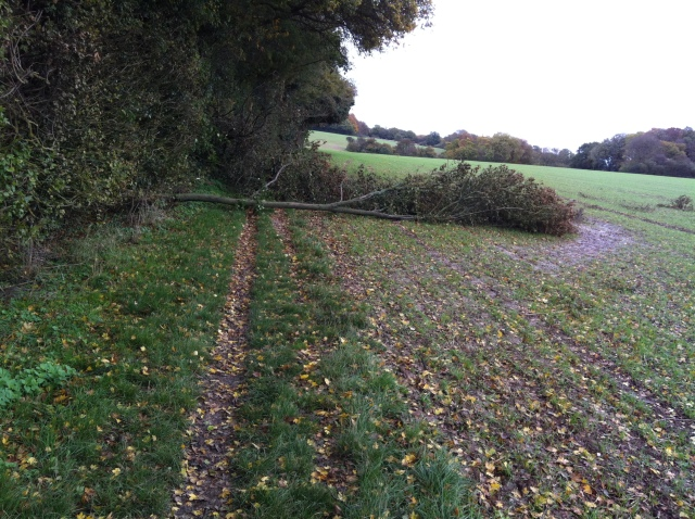 The path is blocked by a fallen tree