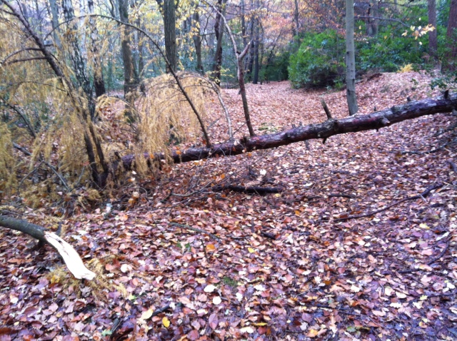 The photo show a fallen tree blocking the path. The trunk is probably around a foot in diameter and the gap under the tree is approx 3 foot.