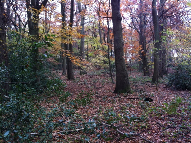 A pretty woodland view showing the autumn colours