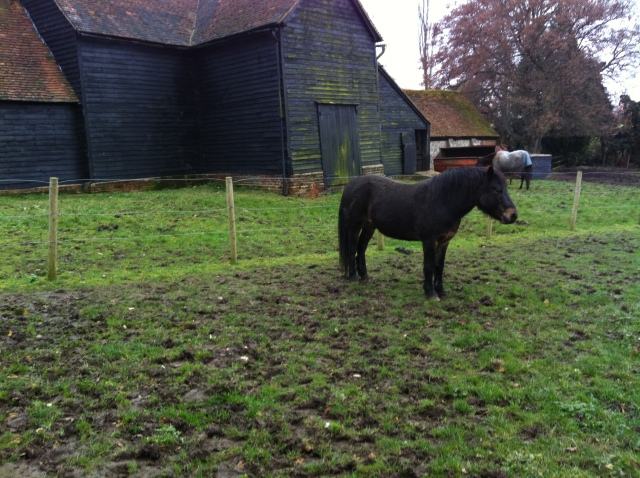 Picture shows a stubborn horse who then decided o follow us across the field