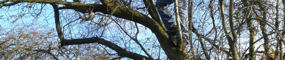 Paul is pictured climbing the tree while Geoof is pointing and passing on instructions