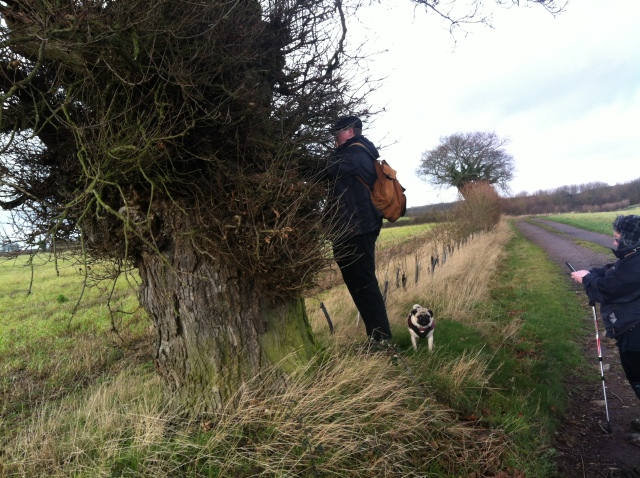 Geoff and Melissa search the tree for a cache whilst Smokey the Pug stands at the ready