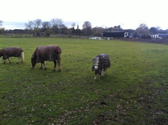 A small group of ponnies comes over to see what the silly people with muddy trousers are up to.