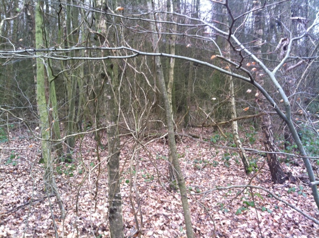 A view back into teh woods that we have just hacked our way through to get to teh Corkers wood cache