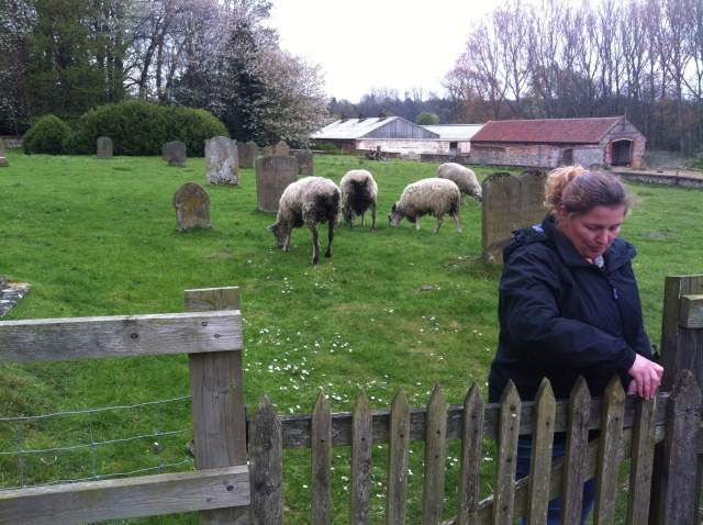 Shar leaves the graveyard closely worried by the sheep.