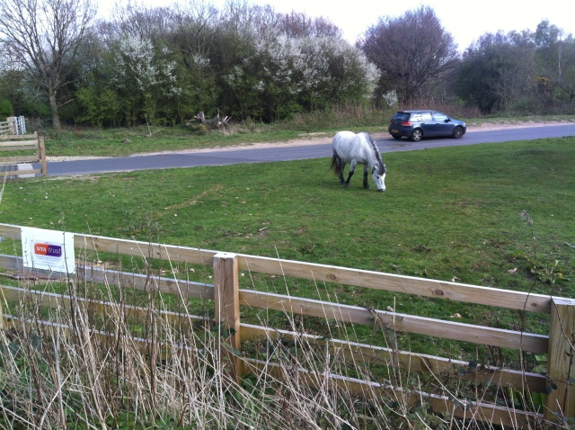 A pony in a field. It's wild apparently.
