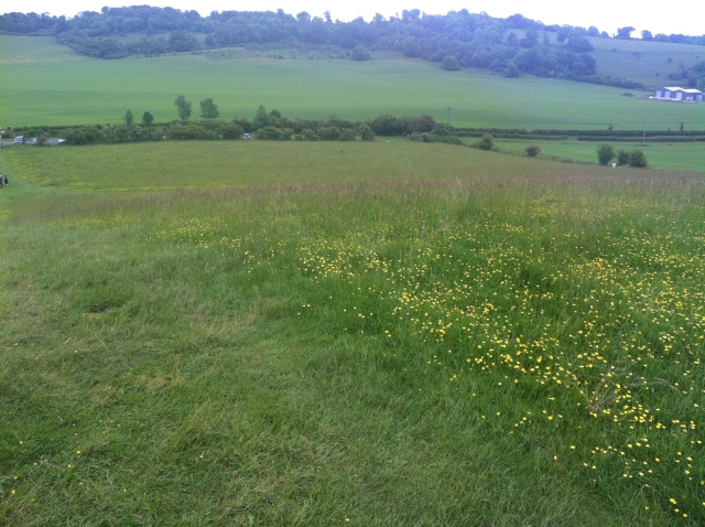 This view shows a flurry of wild flowers in the foreground and the rolling english countryside in the background