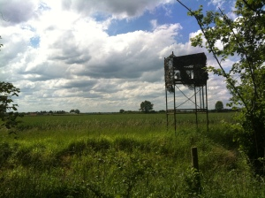 A hide for bird watching is picture raised up in the air on stilts
