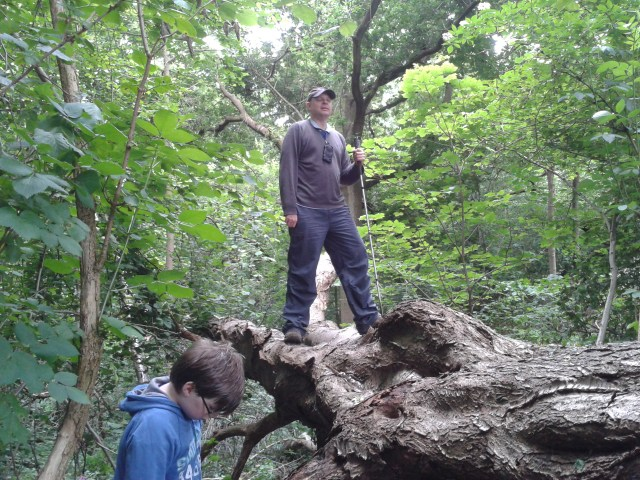 Paul Stands on the trunk  of a large fallen Birch tree that came down across a gully. Hidden underneath was the next clue container.