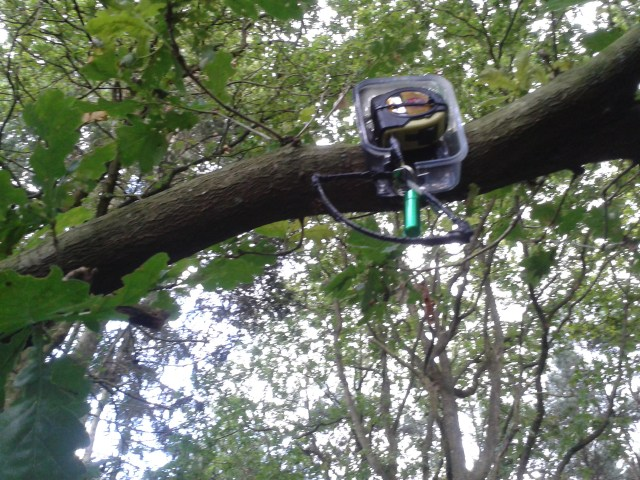 This picture shows the cache fixed to the horizontal limb of a tree. The cache is an plastic lock n lock container that currently has no lid. inside the container is a tape measure with the tape part protuding through a cut hole downwards. On the end of the tape a bison tube and a hook have been attached.