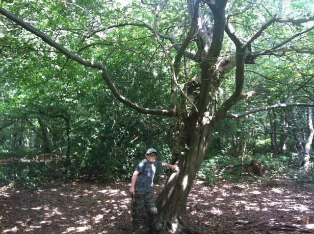 Sam stands next to an intersting couple of trees that have grown intertwined