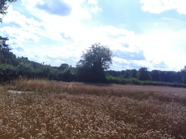 Buckinghamshire View