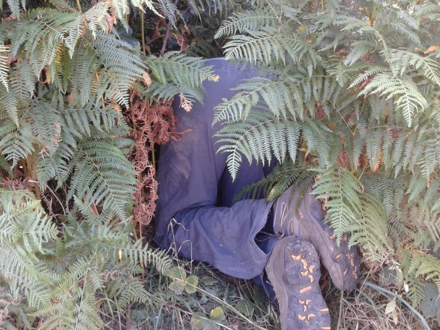 Paul is pictured on his hands an knees with only his backside visible to the camera. The rest of him is buried deep in the hedge in search of the cache