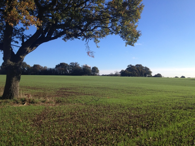 A crips winter scene through the trees across a field. The later autum colours are visible