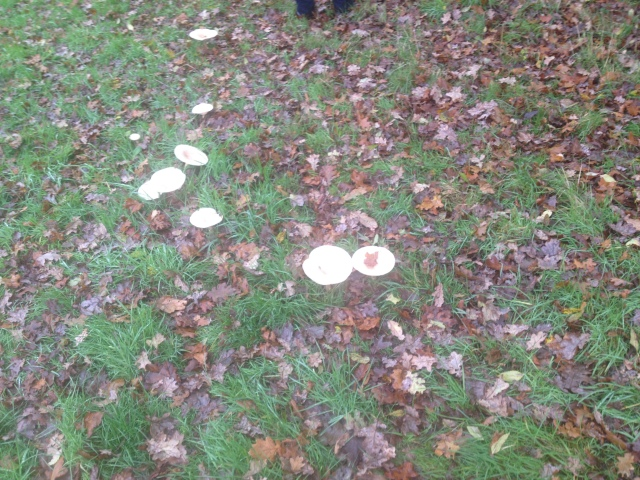 Large Fungi
