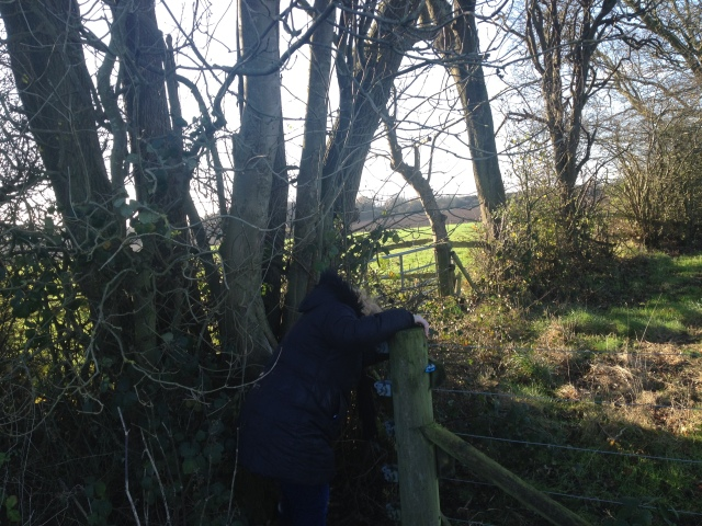 Shar is pictured having just climbed over a wooden fence to search a tree for the cache. The tree is a mass of low spindly branches and bracken. In the background farm fields stretch into the distance.