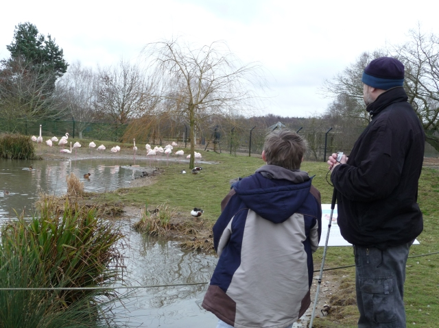 Paul and Sam watch a group of flamingos in the water