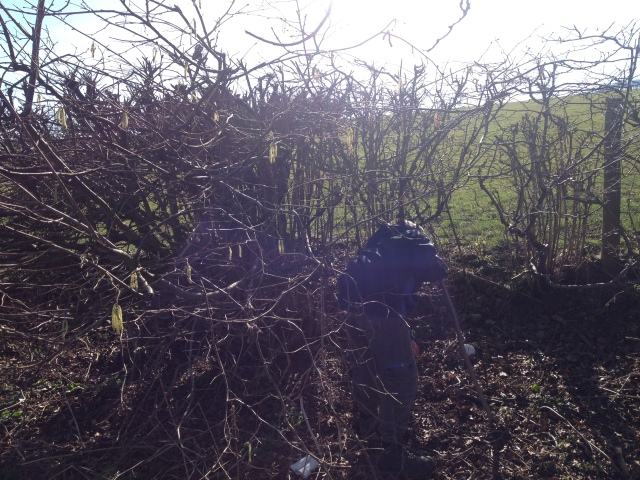 Sam is pictured searching in the bushes for a geocache.