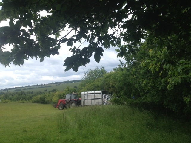 A tractor with a trailer is backed up to the edge of a field where a farmer prepares to load the sheep on board.