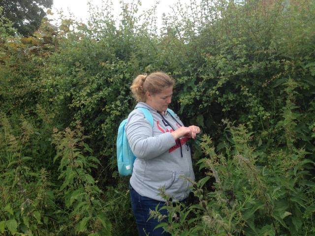 Shar reaches into a holly bush for a cache.