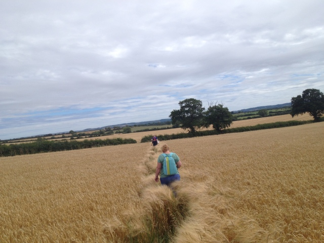 This picture shows a crop field with a path winding through it. Sam and Shar can be seen in the near distance and further away are Geoff and Graham, all with their backs to the camera, walking away.