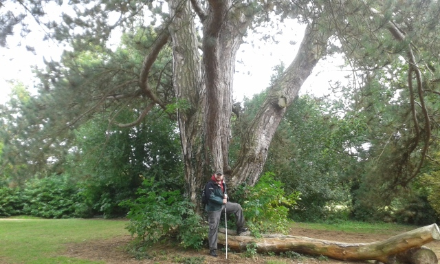 Paul Stands next to a monkey puzzle tree that is placed in the middle of Leavesden Country Park
