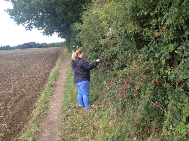 Shar stands at the edge of a farm field picking blackberries from the bramble.
