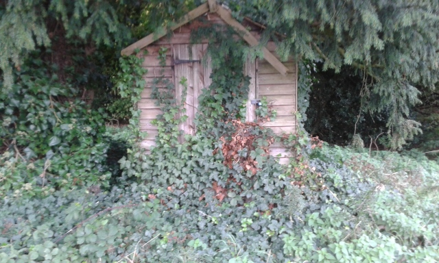 A shed is hidden in the woods almost completely covered in ivy and looks like it could be a nice large geocache.