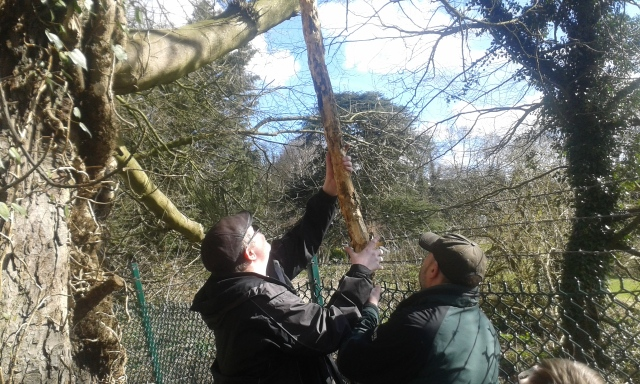 Geoff and Paul holding the hastily assembly tool consisting of multiple branches taped together trying to unsnag a cache mechanism
