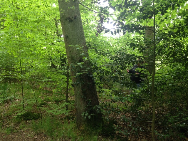 Sharlene is barely visible in amongst the holly looking for a cache