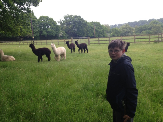 Sam stands in a field with a group of alpacas watching him from behind.