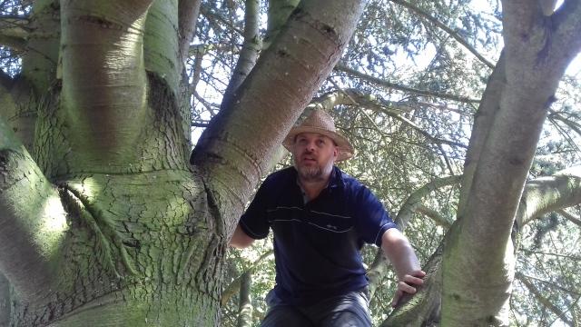 Paul is climbing a tree