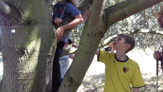The boys try to find the cache up a tree