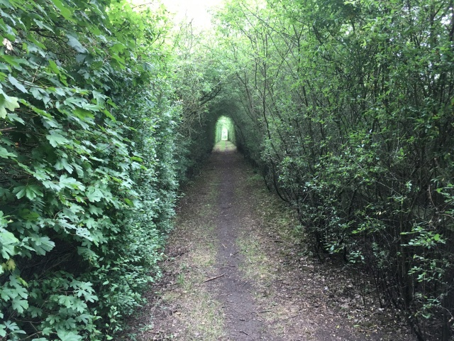 A view down a path where the trees have grown over creating a tunnel like effect.